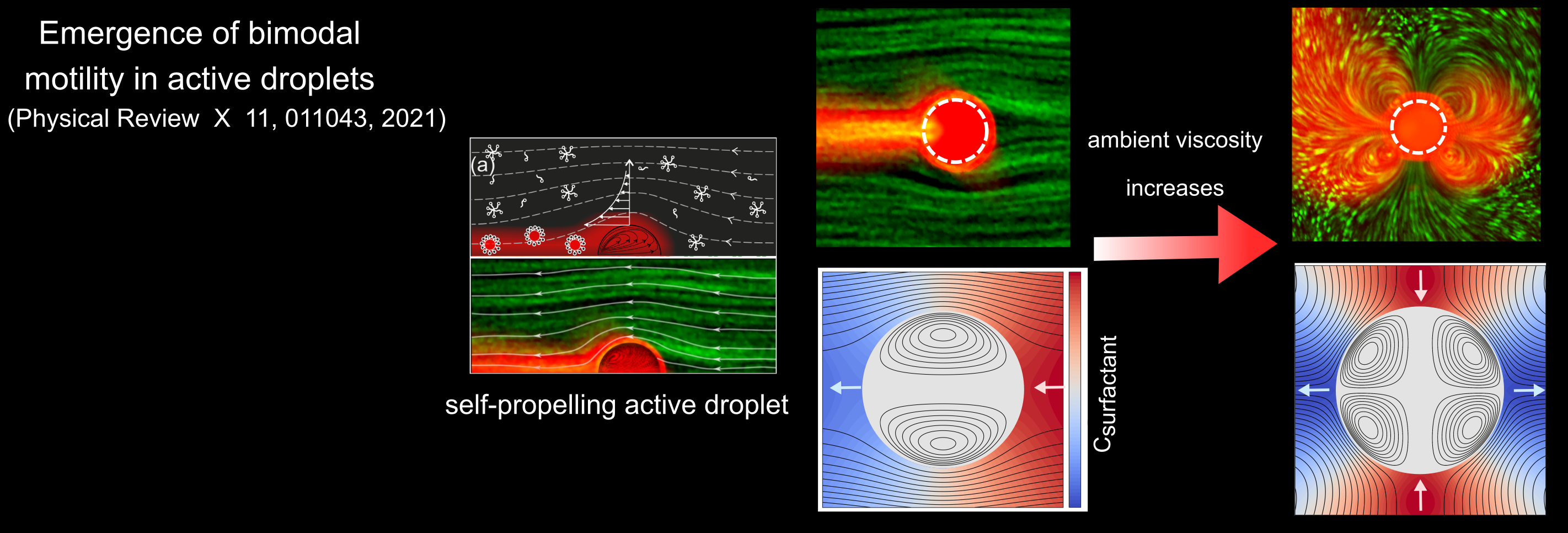 Emergence of bimodal motility in active droplets